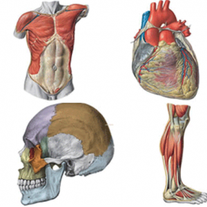 Anatomy-and-Physiology Course